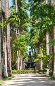 English fountain, palm alley. Botanical garden. Rio de Janeiro