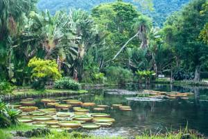 Victoria Regia, Botanical Garden, Rio de Janeiro, Brazil