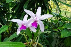 Orquídea do Jardim Botânico do Rio de Janeiro