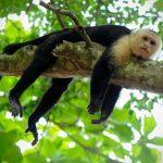 Roteiro de 12 dias na Costa Rica