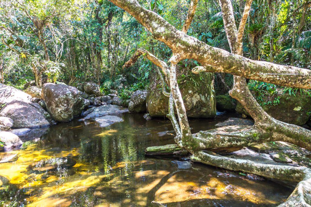 Reserva Ecológica Estadual da Juatinga (REEJ, Saco de Mamanguá, Paraty, Rio de Janeiro, Brazil