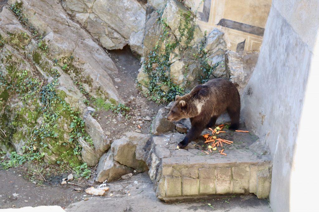 Urso no fosso do castelo de Cesky Krumlov, República Tcheca
